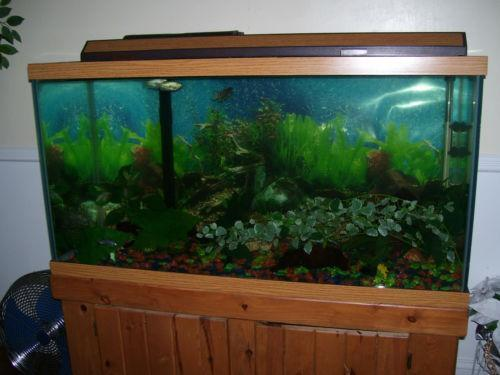 90 gallon aquarium ebay for 90 gallon fish tank stand