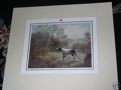 LARGE ANTIQUE ENGLISH POINTER GUNDOG DOG PICTURE