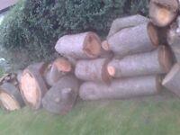 HARDWOOD LOGS FROM A 200 YEAR OLD CEDAR ATLANTIC TREE