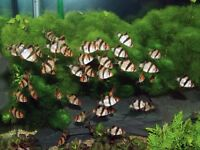 Tropical Fish Community Bundle Clearance