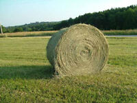 New Crop Timothy Hay For Sale (Round Bales)
