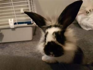 "Baby Male Rabbit - Dutch: ""Breezy"""