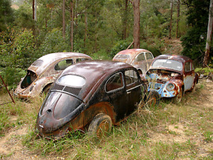 Looking for a cheap 1966 beetle parts car