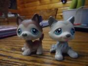 Littlest Pet Shop Husky