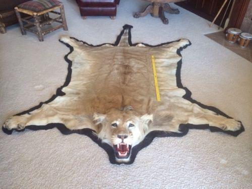 Lion Rug Ebay