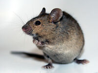 Pest Control Barrie- 100% Elimination Guaranteed - All Pests ***
