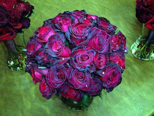 Red Rose Bush Ebay