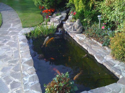 Shubunkins koi pond fish ebay for Fish suitable for small pond