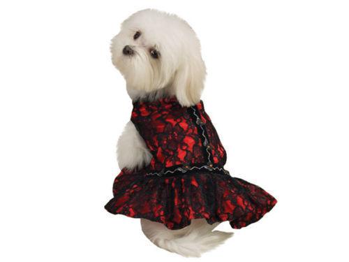 Zack & Zoey Dog Red Lace Flamenco Dance DRESS XS Brand New w/tag 50% OFF SALE