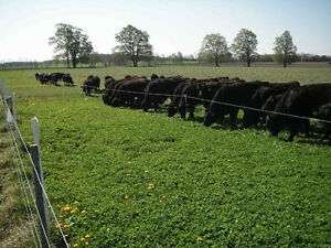 Livesock Fencing and Hay/Pasture seed.