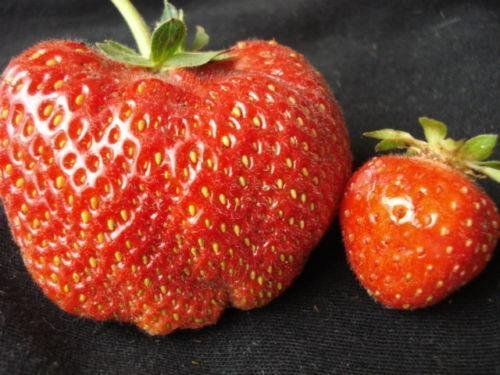 Image result for bid and small strawberry hd