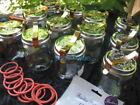 Fowlers Vacola Jars Food Storage Sets