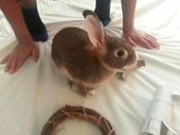 "Adult Male Rabbit - Bunny Rabbit: ""Jumpy"""