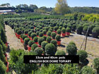 Plant Hedging Bushes & Shrubs