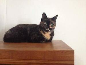 "Adult Female Cat - Tortoiseshell: ""splice"""