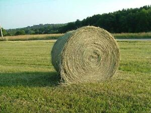 Hay for Sale - LARGE ROUND BALES