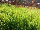 Live Terrarium Moss