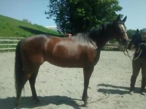 "Young Female Horse - Thoroughbred: ""Exotic Light 'Paddy'"""