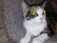 """Adult Female Cat - Calico: """"Baby Grace"""""""