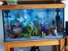 Fresh Water Aquarium Cabinet Aquariums