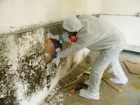 mold removal,basement mold, attic mold,insulation mould,vent