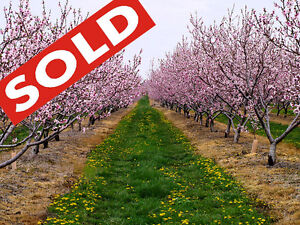 Sold - 9 acres peach farm with house, close town and lake