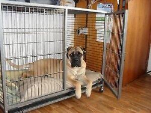 Trasportino-gabbia-box-con-ruote-per-cani-L-110-x-70-x-H-90-cm-OMAGGIO