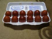 Marans Hatching Eggs