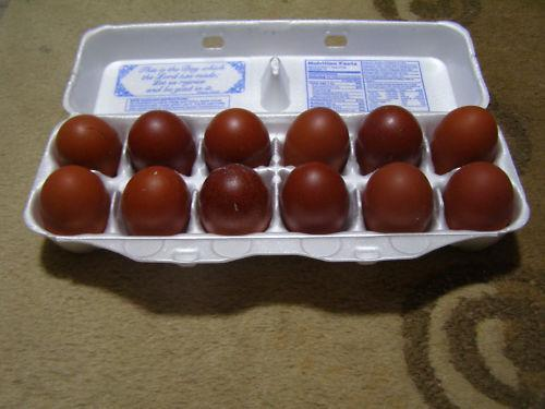 Marans Hatching Eggs Poultry Ebay