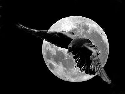 Dark Moon Circle Products