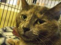 "Adult Female Cat - Dilute Calico: ""Mrs. Minnie"""