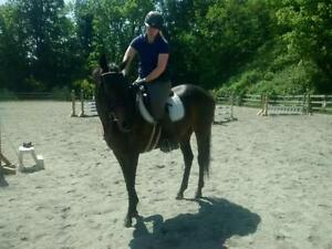 "Adult Female Horse - Thoroughbred: ""Revster"""
