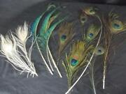 White Peacock Feathers