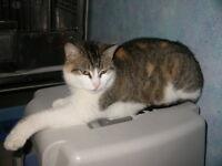 """Adult Female Cat - Calico: """"Praline"""""""