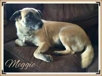 "Adult Female Dog - German Shepherd Dog: ""Meggie"""