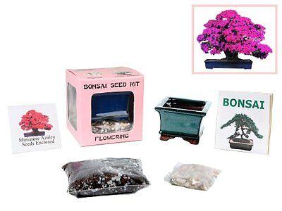 Complete Seed Starter Kit Indoor Miniature Azalea Bonsai Tree Fun By Eves New