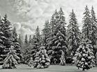 Forest White Art