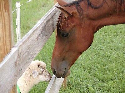 Rural Veterinary Outreach, Inc
