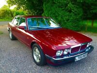 Wanted Jaguar XJ40 Sport or Gold edition