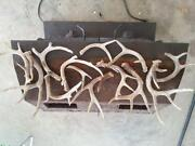 Whitetail Sheds