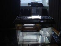 Job Lot 4 Plastic Spider Reptile Insect Tanks Vivarium