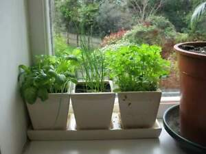 WANTED--Kitchen Herbs--FREE or WILL TRADE for hardy garden bulbs