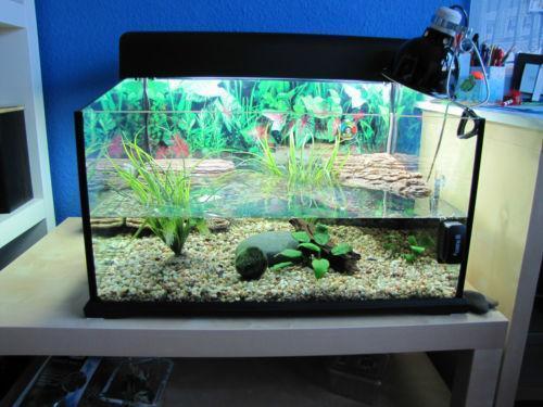 Wasserschildkr ten aquarium haustierbedarf ebay for Aquarium versand