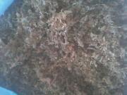 Oak Shavings