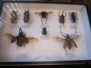 Taxidermy Bugs