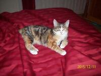 "Young Female Cat - Domestic Short Hair: ""Pistache"""