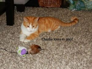 Charlie is looking for an older family to love him