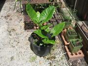 Large Planter Pots