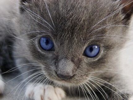***WANTED***: Kitten for family Bankstown Area Preview