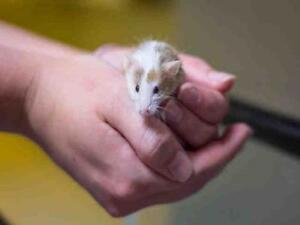 "Adult Female Small & Furry - Mouse: ""FIONA"""